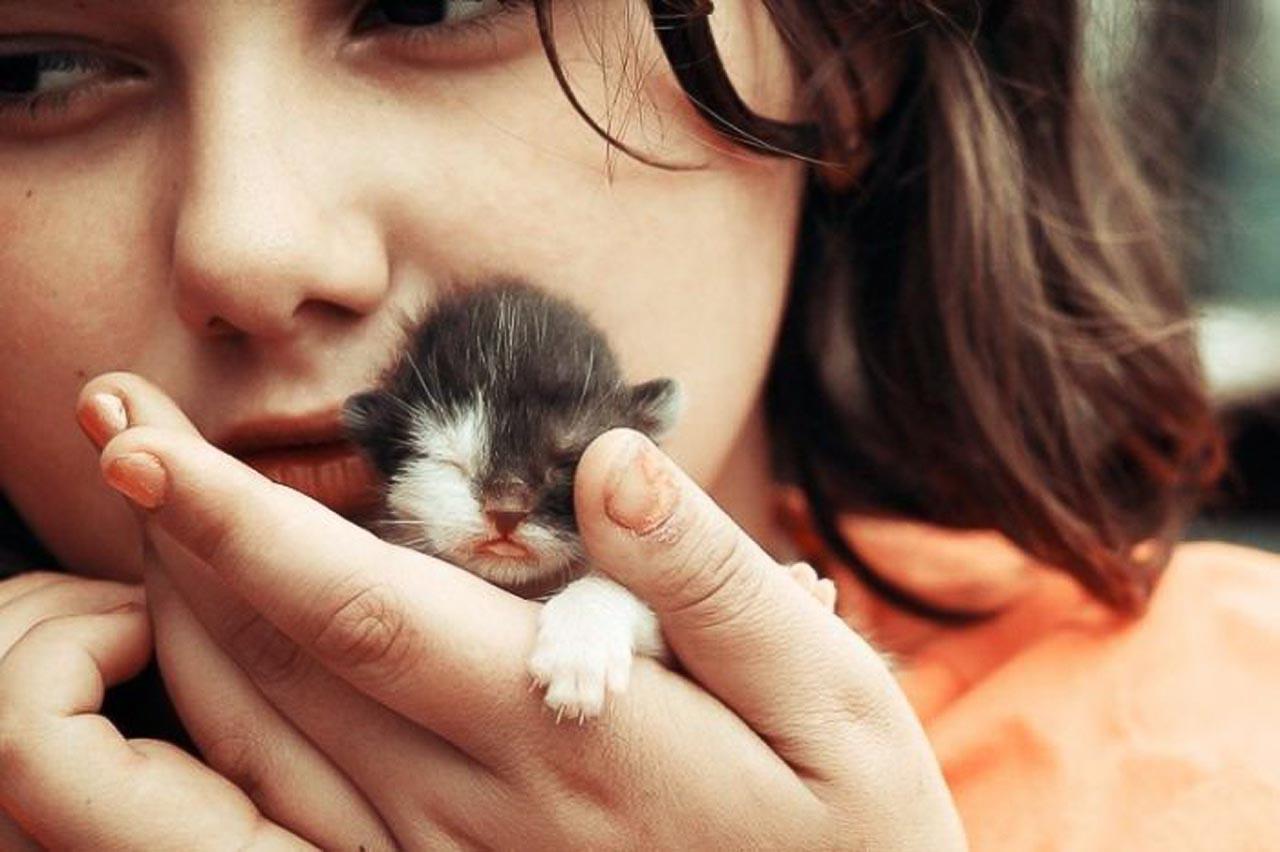 1307722608_1307710854_cats_cats_35